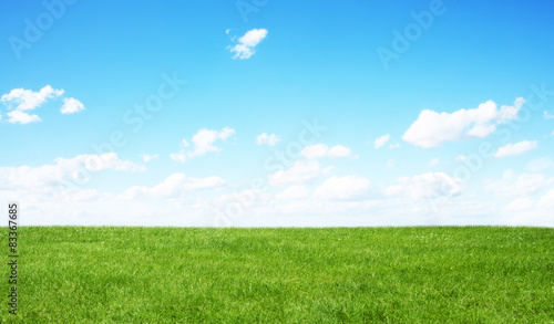 Photo sur Toile Herbe Green field and blue sky