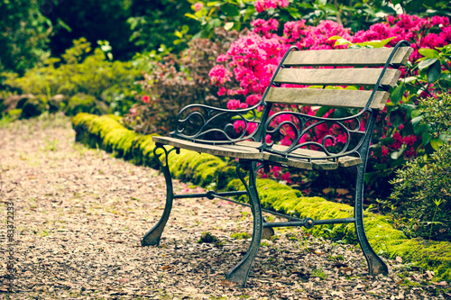 Fototapety, obrazy: Bench in the park