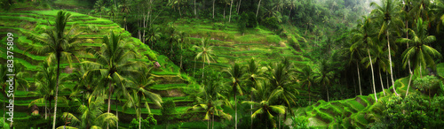 Montage in der Fensternische Bali Rice fields near Ubud in Bali