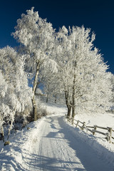 Fototapeta Inspiracje na zimę Zimowa droga na Kaszubach