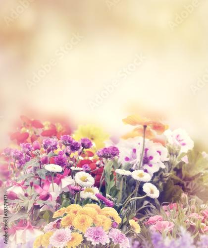 In de dag Bloemen Flowers In The Garden
