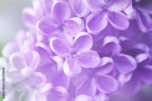 Foto op Plexiglas Lilac Abstract floral background