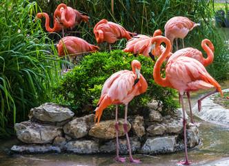 Fototapetaflamingo family in Lisbon zoo, Portugal