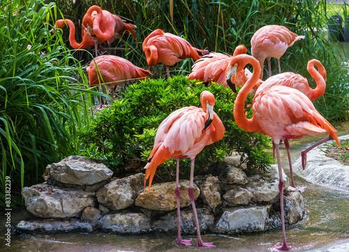 Garden Poster Flamingo flamingo family in Lisbon zoo, Portugal