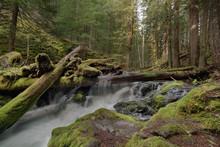 Log Jam At Panther Creek Falls