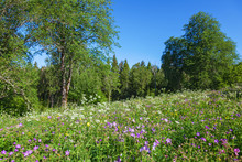 Summer Meadow At The Forest Edge