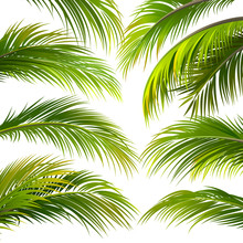 Palm Leaves. Vector