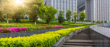 Green Garden In City
