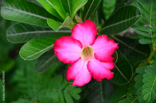flowers color nature tropical pink green