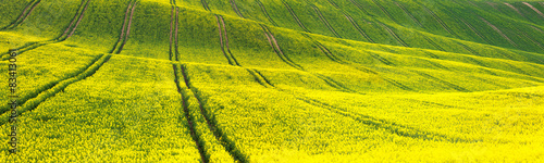 Poster Jaune Panoramic background of yellow-green floral field
