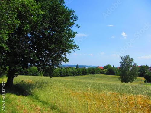 Fototapeta Naherholungsgebiet Zwickau obraz na płótnie