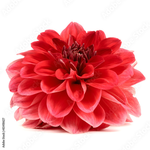 Spoed Foto op Canvas Dahlia Red Dahlia Flower Isolated on White Background