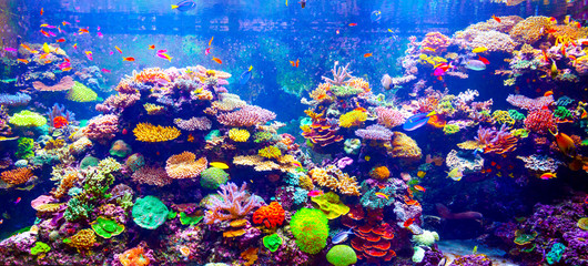 Obraz na SzkleCoral Reef and Tropical Fish