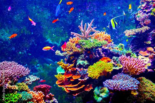 Photo Stands Coral reefs Singapore aquarium