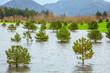 Überschwemmung in Oregon