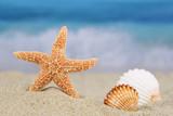 Strand Szene im Sommer, Urlaub mit Seestern und Muscheln, Textfr