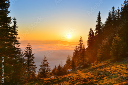 Foto auf Leinwand Wald Sunrise forest in spring mountains