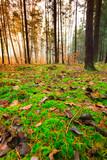 Liście na ziemii w lesie