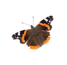 Red Admiral Butterfly Isolated On White