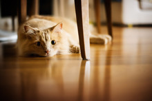 Sad Cat Lying On The Floor