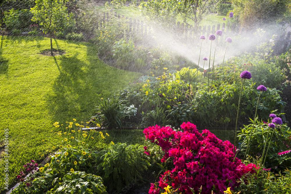 Fototapety, obrazy: Bewässerung im Blumengarten