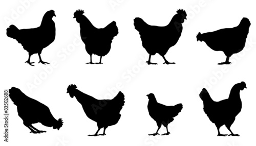 Canvas-taulu chicken silhouettes