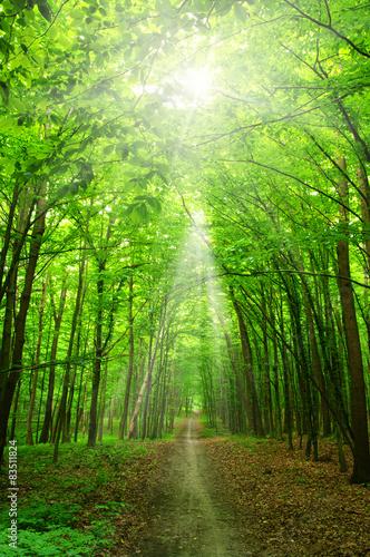 In de dag Bomen sunlight forest