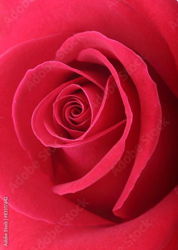 Tematy naklejek na wymiar roza-w-kolorze-koralowym