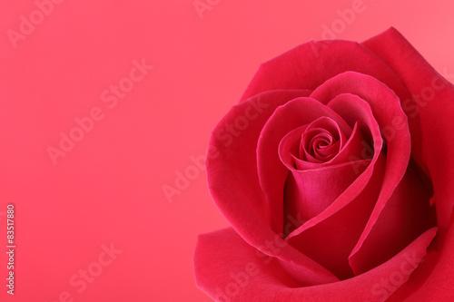 Tematy naklejek na wymiar czerwony-kwiat-rozy-z-pieknymi-platkami-ksztalt-serca