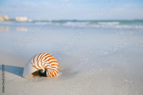 Fotografie, Obraz  nautilus shell on a sea ocean beach sand