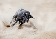 Bull Running On Dirt Road