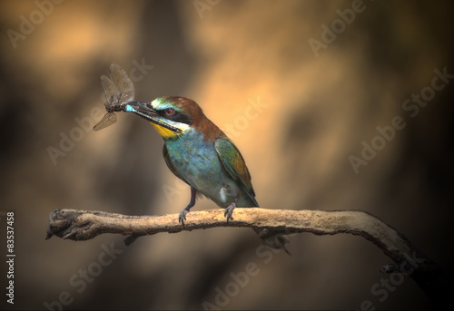 Spain, Navarra, Comunidad Foral de Navarra, Bee-eater perching on branch and holding insect