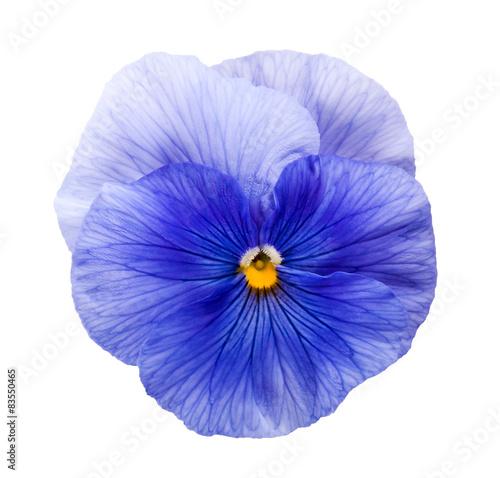Crédence de cuisine en verre imprimé Pansies Violet flower