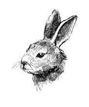 Hand Drawn Vector Rabbit On Wh...
