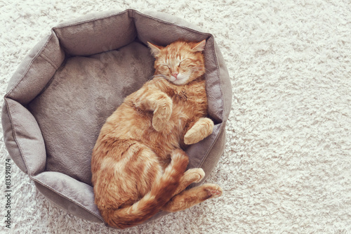 Fotografie, Obraz  Cat sleeping