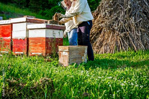 Fotobehang Indiërs Work in apiary