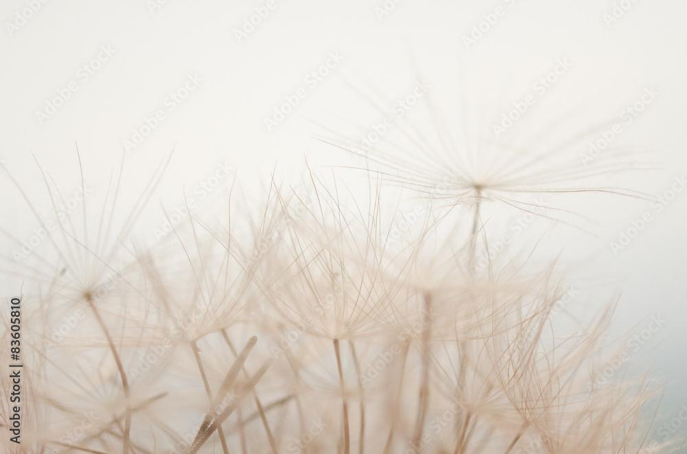 Fototapety, obrazy: soffioni al cielo