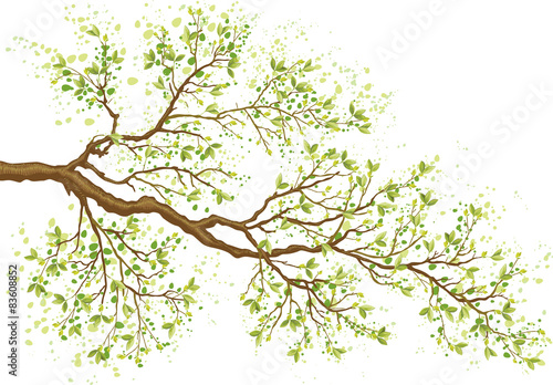 Obraz Tree branch with green leaves - fototapety do salonu
