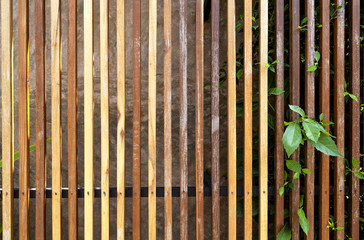 Wooden fence texture and green leaf