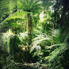 Obraz na Szkle Drzewa Jungle