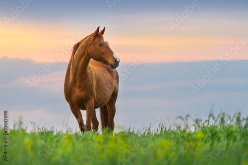 Photo  Beautiful red mare on green pasture against sunset sky