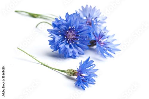 Photo  bleuets sur fond blanc