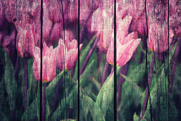 Grunge conceptual purple color flower tulips