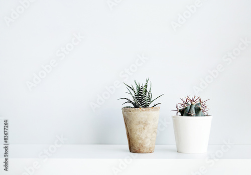 Poster Cactus succulent and cactus in the pot. Scandinavian white interior