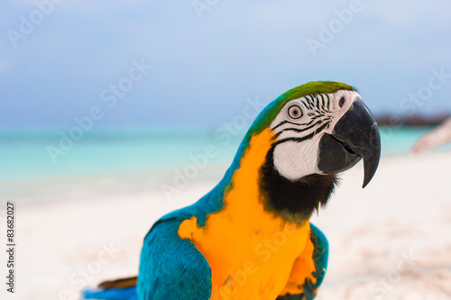 Foto op Canvas Papegaai Funny bright colorful parrot on the white sand in the Maldives