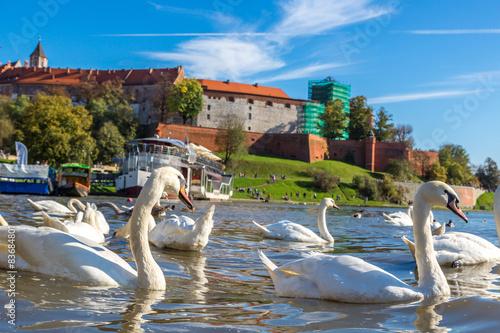 Fototapeta Wawel castle in Krakow obraz