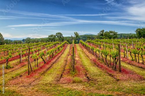 Garden Poster Vineyard Tokaj vineyard in beautiful landscape scenery.