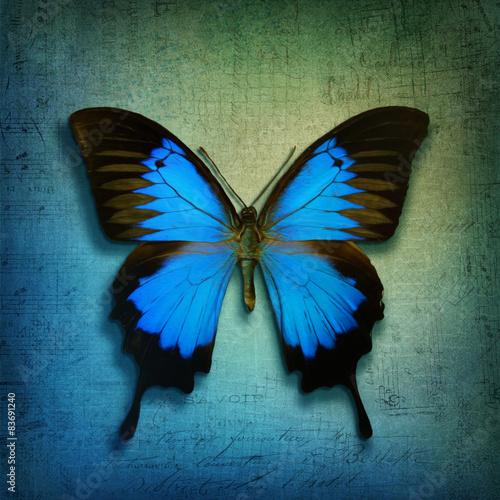Montage in der Fensternische Schmetterlinge im Grunge Vintage background