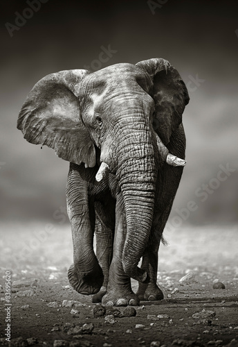 Foto op Aluminium Olifant Elephant approach from the front