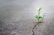 Leinwandbild Motiv white flower growing on crack street, soft focus.